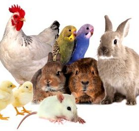 Bird & Poultry Food